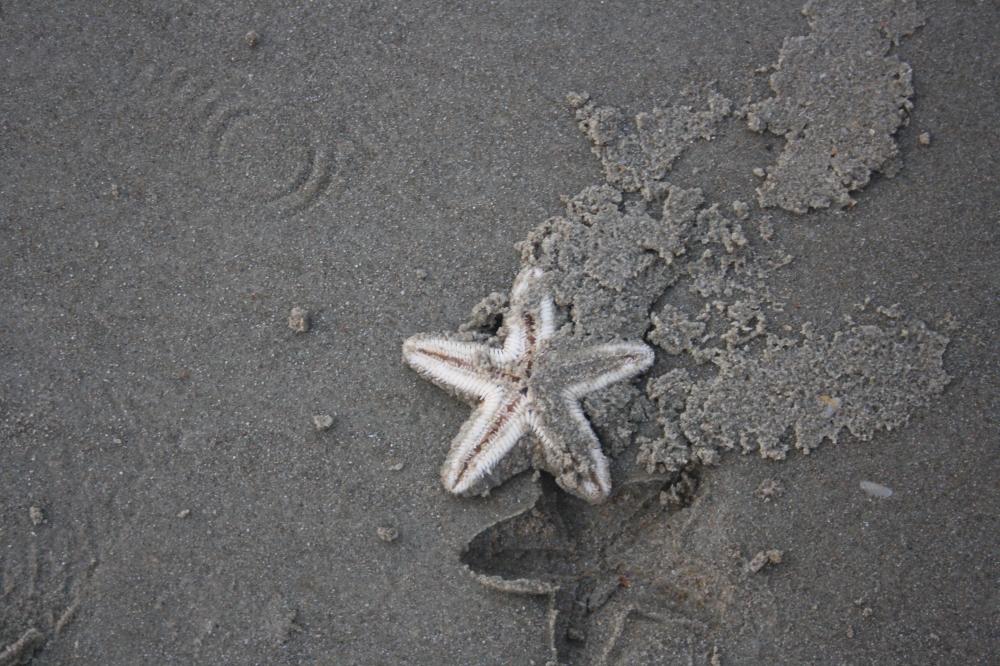 Beach, Goa, Sand