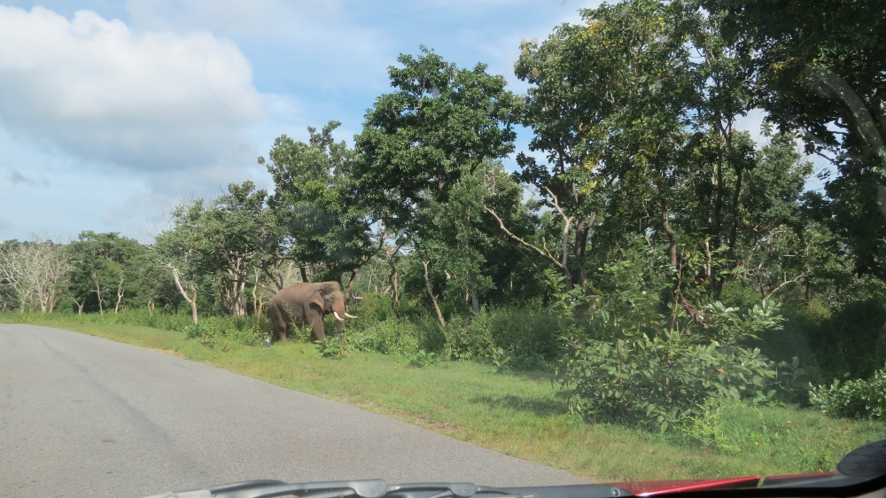 elephants in bandipur national park