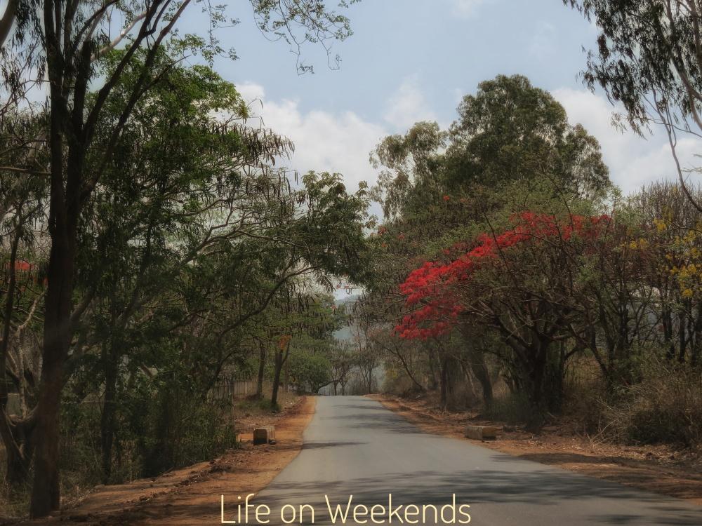 Chinnar wildlife sanctuary, Munnar