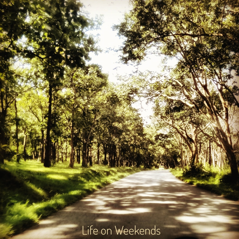 Bandipur National Park @ Life on Weekends