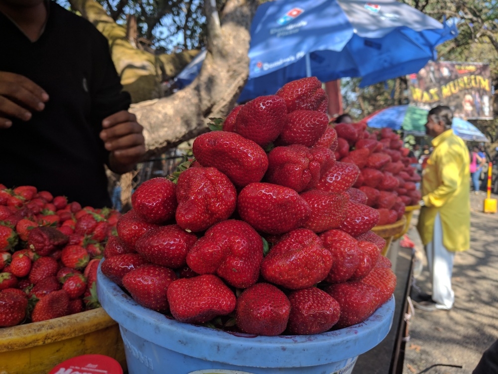 Strawberries, Panchgani, Mahabaleshwar, Maharashtra @Life on Weekends