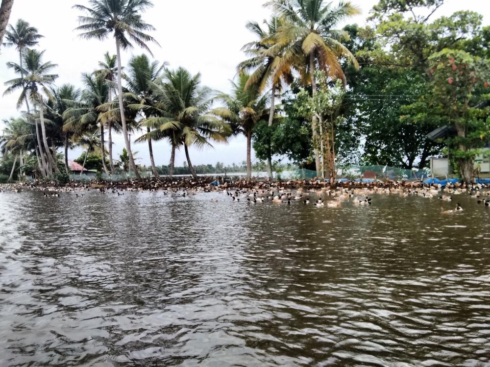 Allepey backwaters, Kerala
