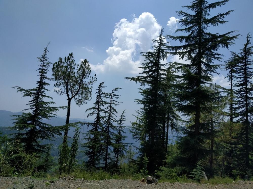 Mashobhra, Shimla