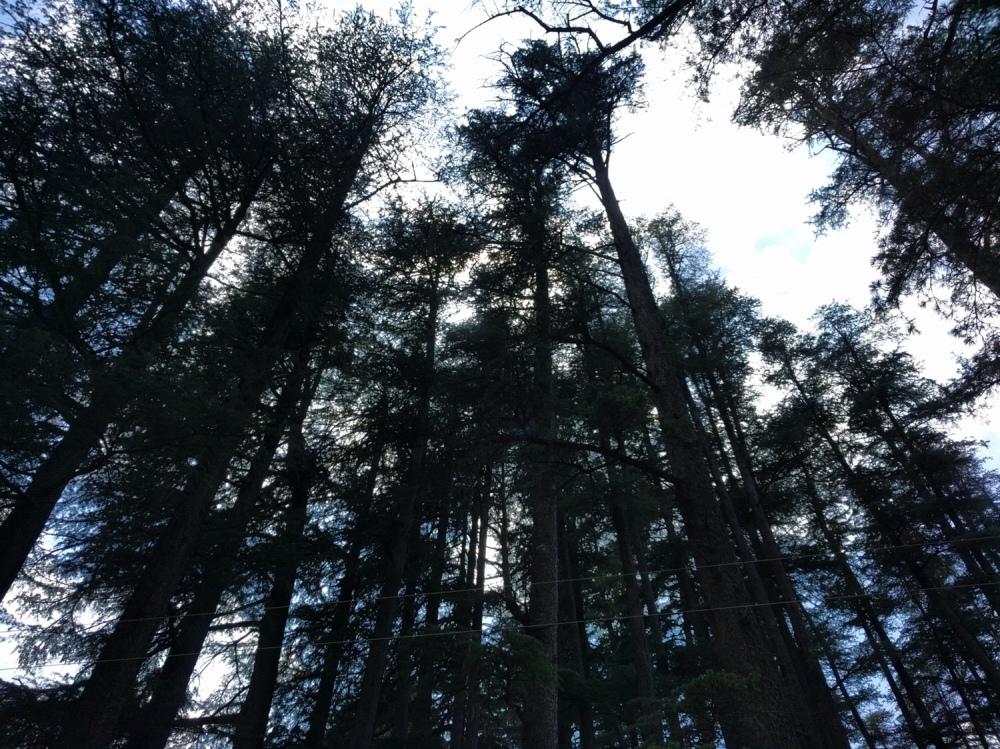 Naldehra, Shimla