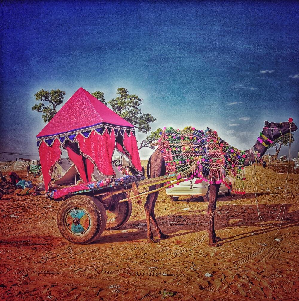 Pushkar Animal Fair, Rajasthan